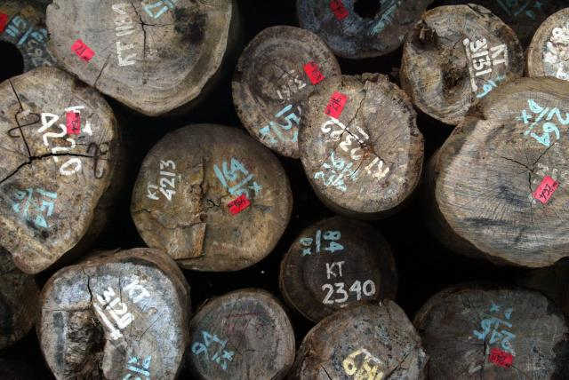 Get the low-down on illegal timber