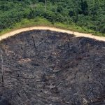 Rainforest protection plans reward the industries destroying forests