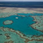 Look at how far we've come: the biggest wins in the campaign to Save the Reef