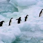 New Antarctic Ocean Alliance to blaze trail for marine reserves