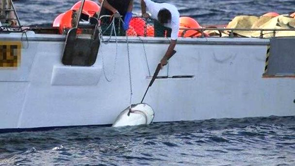 Shark being killed with a rifle next to a boat.