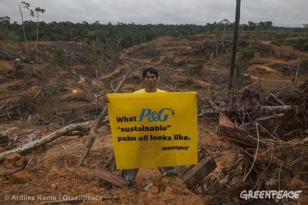 Greenpeace campaigner Wirendro Sumargo holds a banner inside a palm oil concession owned by PT Multi Persada Gatramegah (PT MPG), a subsidiary of Musim Mas company, a palm oil supplier to Procter & Gamble in Central Kalimantan, Indonesia. 03/10/2014