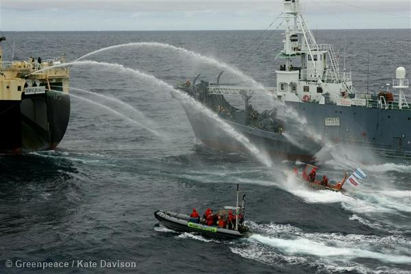 Japanese Whaling Fleet and Greenpeace Inflatables