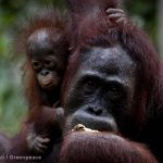 Johnson and Johnson: the path to 'No More Tears' in Indonesian rainforests