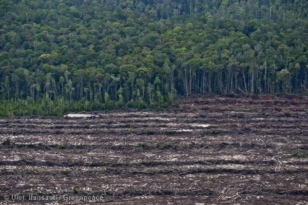Deforestation in Central Kalimantan