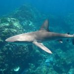 6 JAWsome shark facts!