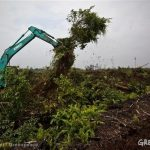 Palm oil companies say they'll put forest destruction on hold. But what happens next?