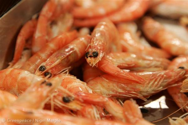 Prawns in supermarket