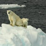 What happens in the Arctic doesn't stay in the Arctic