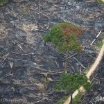 Tropical deforestation is bad news – the science keeps telling us