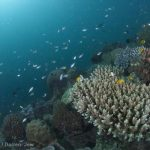 6 reasons the Great Barrier Reef needs you to divest right now