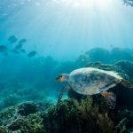 Death by plastic: Why are turtles dying near Sydney?
