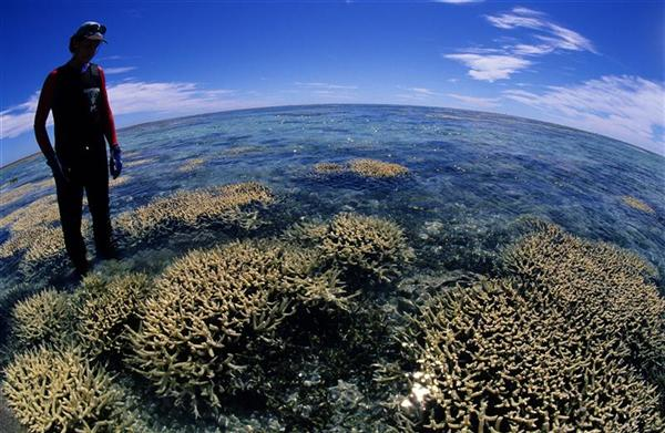 Dr Peter Harrison, Southern Cross University with bleached coral, Great Barrier Reef.
