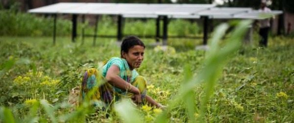 Renewable Energy for All: How an Indian Village Was Electrified