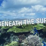 6 myths about risks to the Great Barrier Reef, busted!