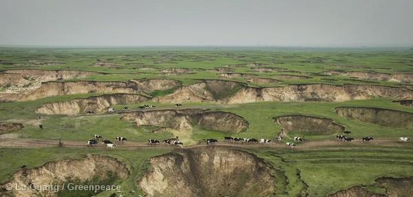 Sink-Holes in Inner Mongolia.  In 2012, there were as many as 139 wells pumping water from the Hulun Buir grassland with an estimated daily displacement of 26 tons. This grassland contains hundreds of collapsed trenches ranging from 1 to 3 metres in depth.