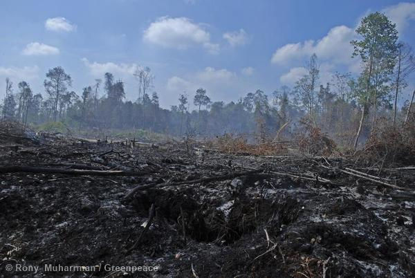 Freshly burnt landscape, evidence of continuing fires in forest moratorium areas. Sumber Jaya Village, District Siak Kecil, Bengkalis, Riau Province, Indonesia.