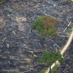 How loggers are destroying the Amazon — and getting away with it