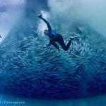 John West announce FAD free tuna