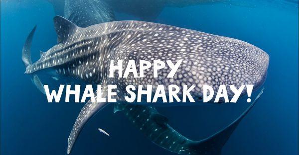 It's not a whale. It's not a shark. It's a whale shark!
