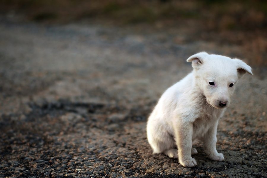 sad-pup