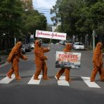 Orangutans take over Sydney