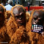 You Stood Up for Rainforests and Companies That Use Palm Oil Are Listening