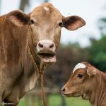World Meat Free Day: Your Guide to a Climate-friendly Diet