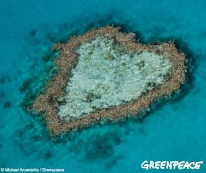 Reef GP heart