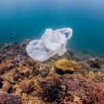 6 amazing plastic bans from around the world