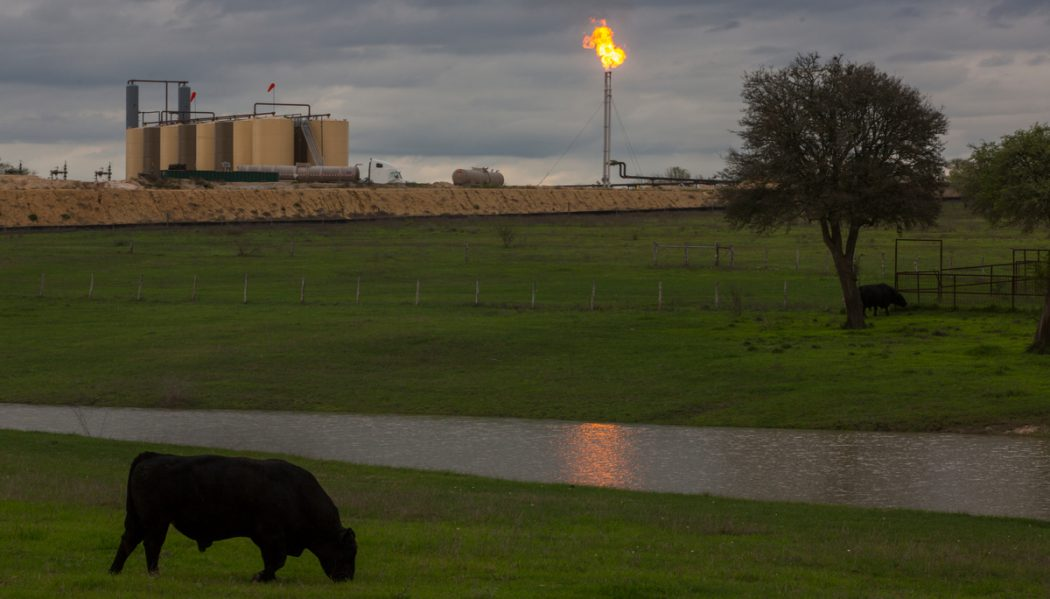 Cattle graze near water storage and a hydrofracking installation on the Eagle Ford Shale play in DeWitt County, Texas. Flaring of excess gas in drilling for oil is also a by product that's vented into the atmosphere releasing all sorts of volatile organic chemicals causing air pollution and climate changing methane gas.