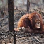 Revealed: HSBC is funding forest destruction