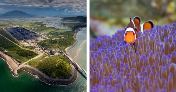 On the Left: Abbot Point port where tonnes of coal will be shipped from the Carmichael mega mine. On the Right: A Clown fish in the Great Barrier Reef