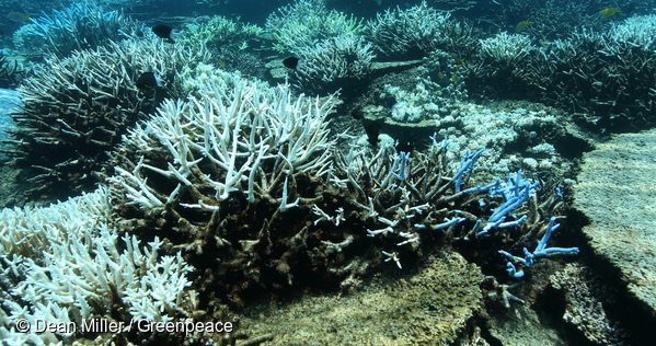 In March the Reef experienced its second major bleaching event in two years.