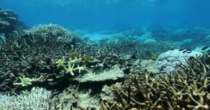 The Reef is experiencing its second major bleaching event in 2 years. In March 2017, Greenpeace Australia Pacific is bearing witness to this tragedy and calling on Governments everywhere to take action against coal.