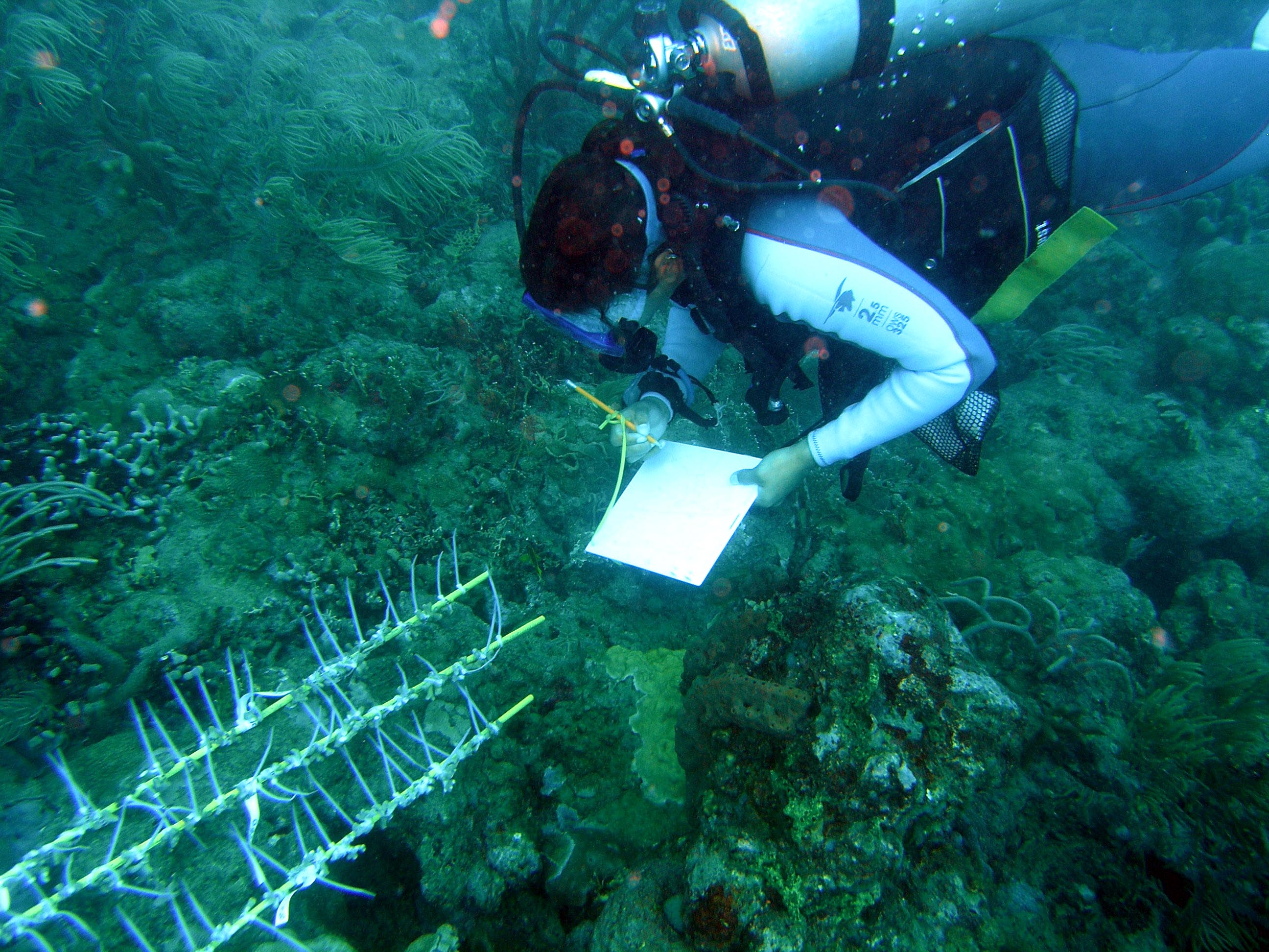 Conducting research on the Great Barrier Reef