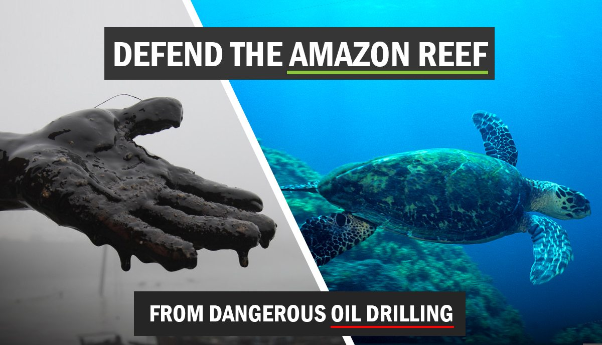 Scientists and public figures call for Amazon Reef protection – the full letter
