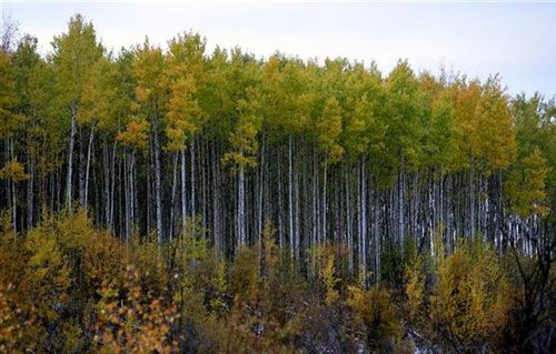 boreal2