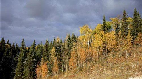 boreal4