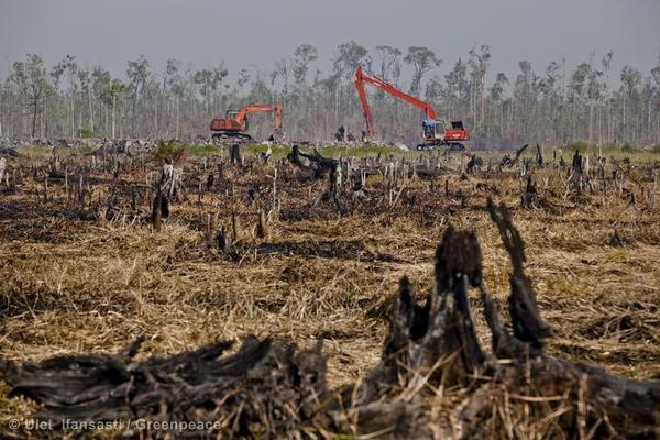 Excavators continue building a peatland drainage cana