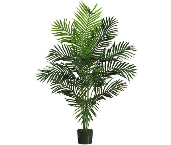 Paradise Palm Web