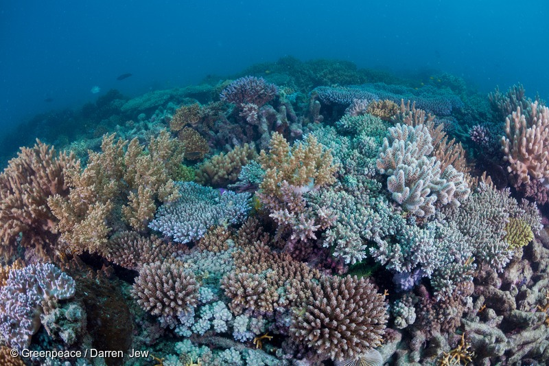 Coral Reef at Holbourne Island in the Great Barrier Reef