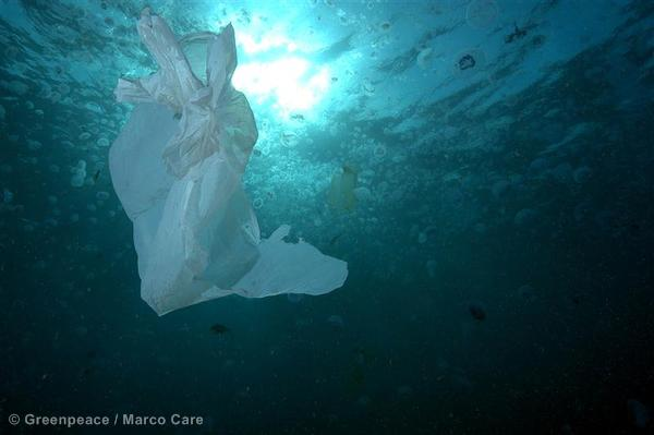Plastic Bag in Water - Red Sea Coastal Development in Egypt - 2006