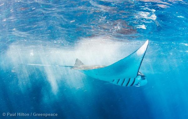Underwater photography in Bali