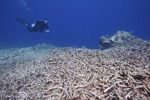 Reef Investigation in Apo Island