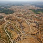 Deforestation in Indonesia: the rainforest has been cleared for palm oil plantations