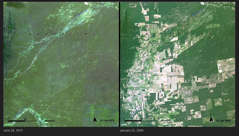 deforestation argentina