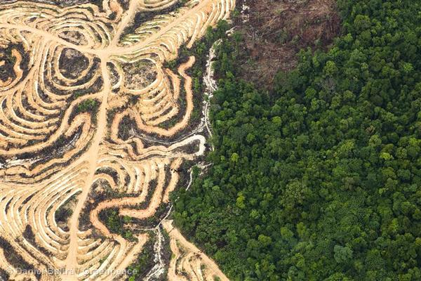 A network of tracks in a deforested area for oil palm plantations near Kwala Kwayan. Indonesia has one of the fastest rates of forest destruction on the planet, with the expansion of palm oil and pulp and paper plantations as the major drivers, pushing the orangutan to the brink of extinction and accelerating climate change.