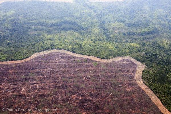 Deforestation in Mato Grosso. Deforestation for cattle farming expansion is seen from the air. The clearance line limits the area to be burned, preventing the fire spreading to the rest of the forest.