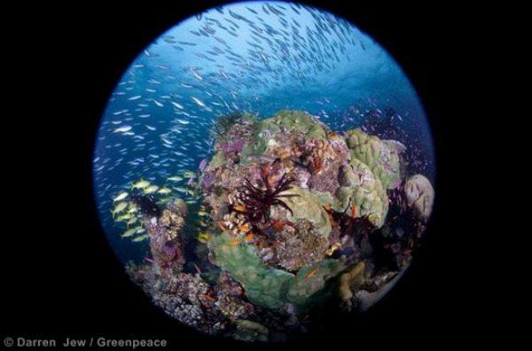 world oceans blog1